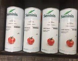 بذر گوجه فرنگی 8320 ، فروش بذر