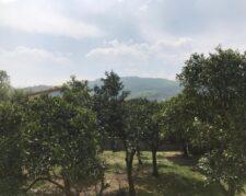 فروش زمین باکاربری باغات واقع در شهر رامسر