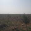 فروش باغچه480متری اقساطی در بهمن آباد(احمدآبادمستوفی)