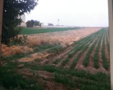 فروش زمین کشاورزی برجاده اصلی ورامین به پیشوا